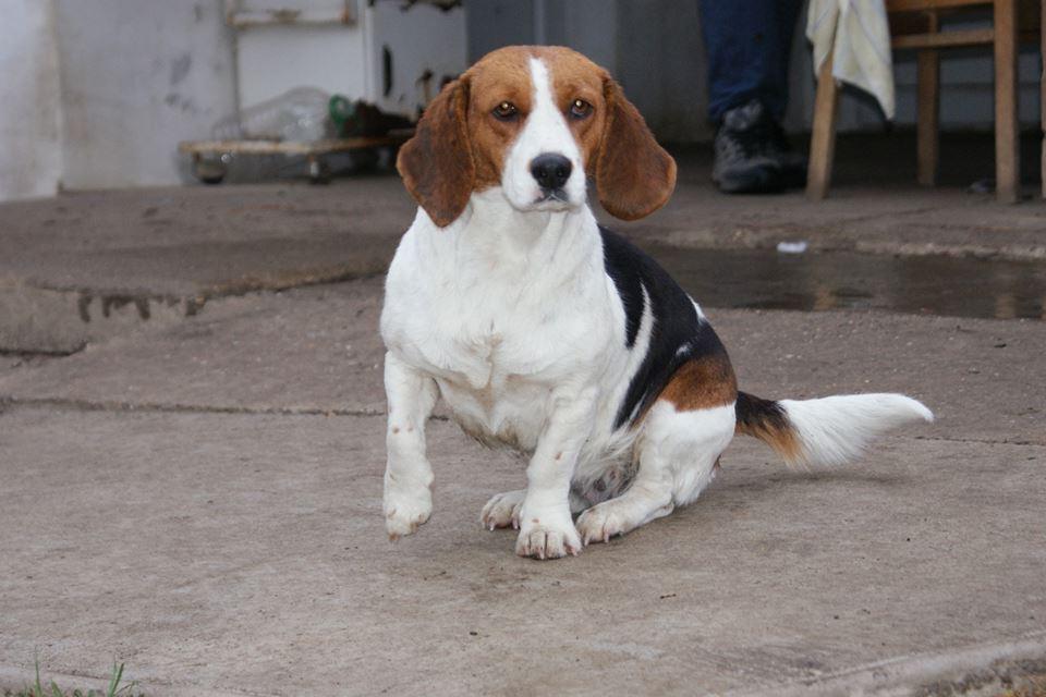 Emily | Beagle-Mix-Hündin | 6 Jahre