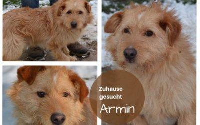 Armin | Mischling | 2 Jahre