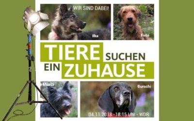 """""""Tiere suchen ein Zuhause"""" im WDR; wir waren wieder dabei"""