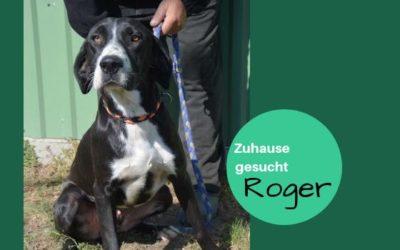 Roger | Jagdhund-Mischling | 3 Jahre