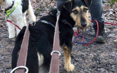 Ary | Terrier-Mix-Hündin | 2 Jahre