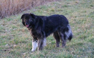 Zsombi | Herder-Mischling | 2 Jahre