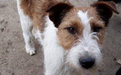 Linda | Terrier | 2 Jahre