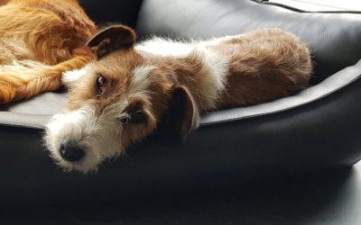 Linda | Terrier | 3 Jahre