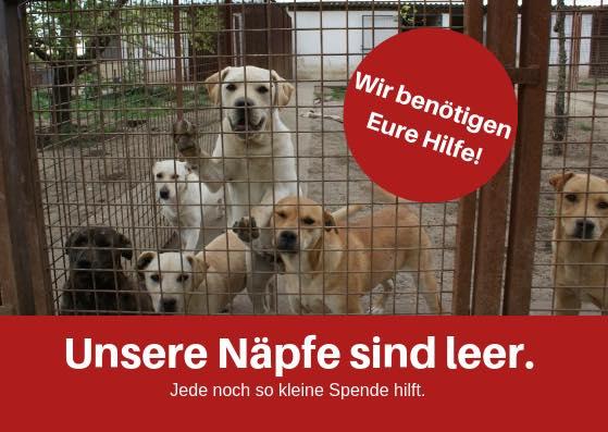Helft uns bitte, die Näpfe zu füllen!