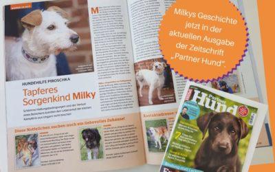 """Milky in der aktuellen Ausgabe der Zeitschrift """"Partner Hund"""""""