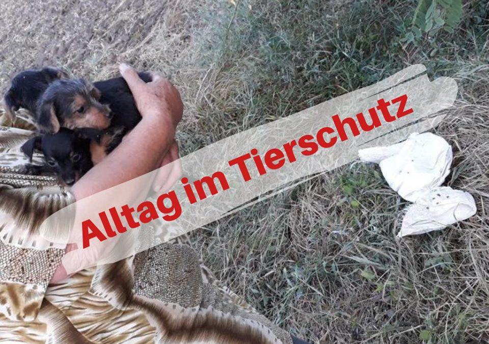 Alltag im Tierschutz