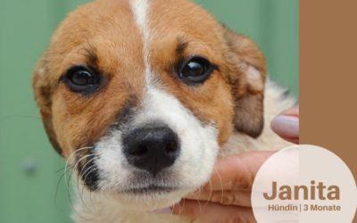Janita | Mix-Hündin | 3 Monate