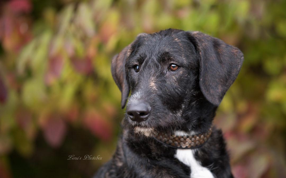 Hundehilfe piroschka