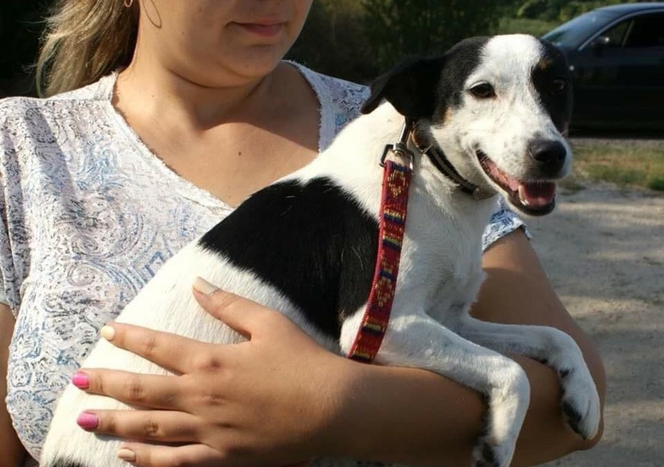 Picur | Terrier-Mix-Hündin | 2-3 Jahre