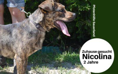 Nicolina | Mischlingshündin | 2 Jahre