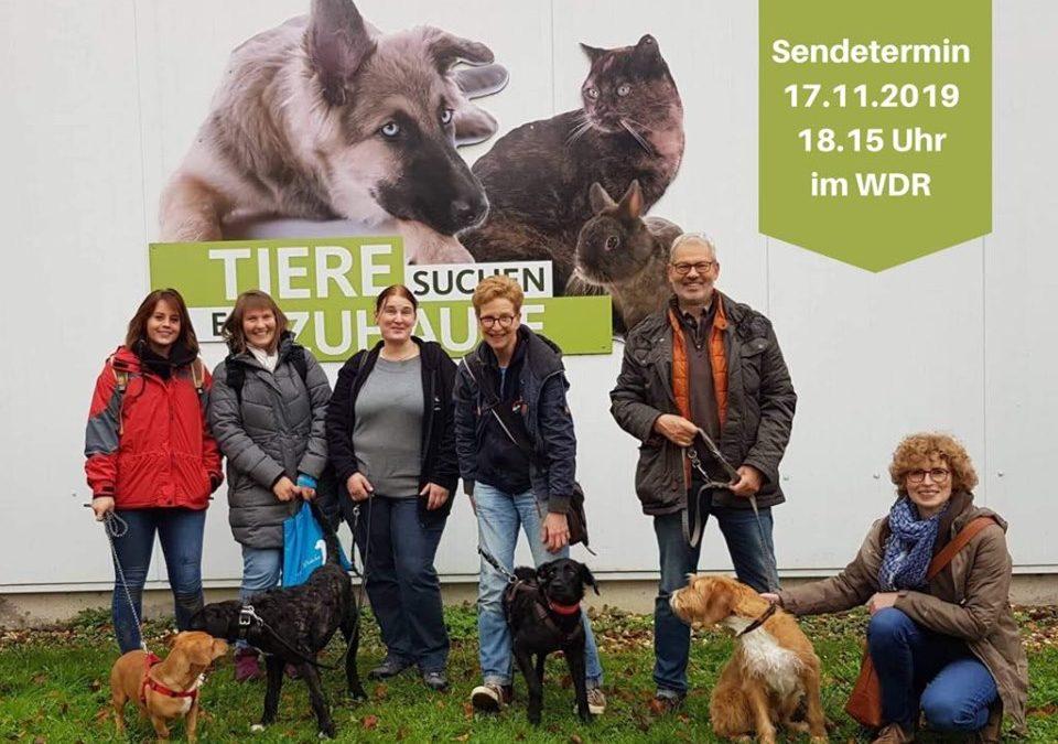 November 2019 zu Gast bei Tiere suchen ein Zuhause