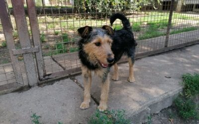 Gyömbér | Terrier-Mix-Hündin | 11 Monate