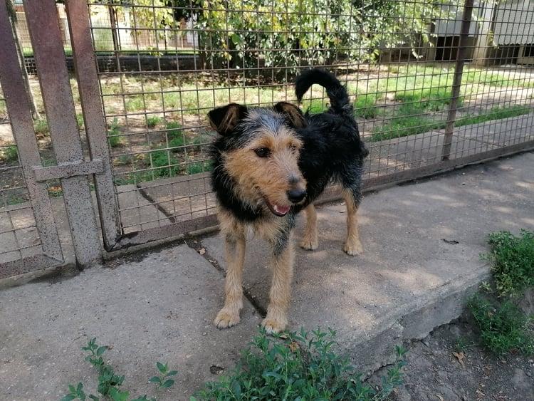 Gyömbér | Terrier-Mix-Hündin | 11 Monate