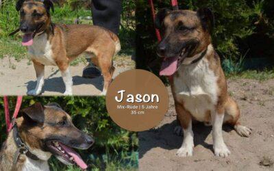 Jason   Mix-Rüde   5 Jahre