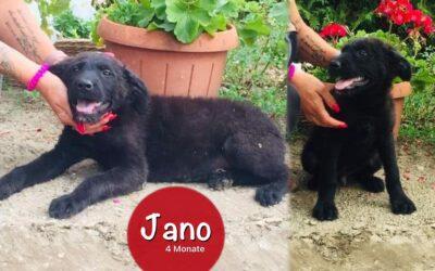 Jano   Mix-Rüde   4 Monate