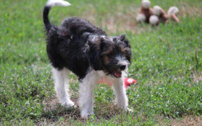 Kitti   Mischlings-Hündin   3 Monate