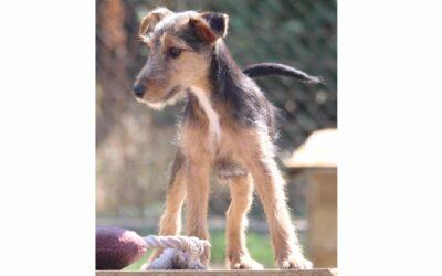 Béli | Terrier-Mix-Rüde | 5 Monate
